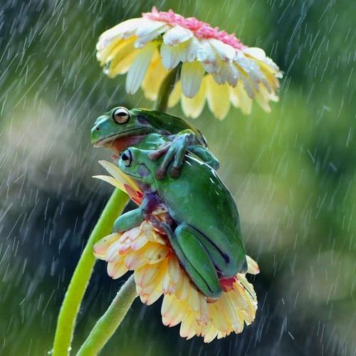 il-pleut-il-mouille-c-est-la-fete-a-la-grenouille-blog-2016-04-12-15-04-19.jpg